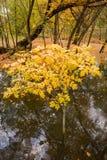 Flod i höstskogen royaltyfria bilder
