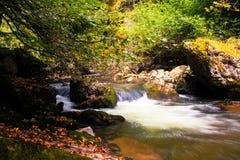 Flod i hösttid, Bulgarien Royaltyfri Fotografi