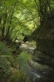 Flod i hjärtan av skogen Arkivbilder