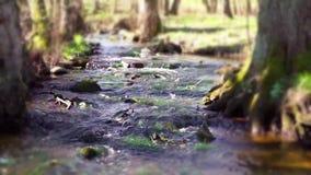 Flod i idyllisk skog lager videofilmer