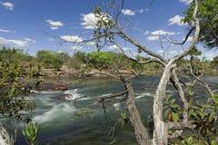 Flod i Jalapao Royaltyfri Foto