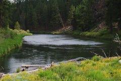 Flod i krökningen Oregon Royaltyfri Bild