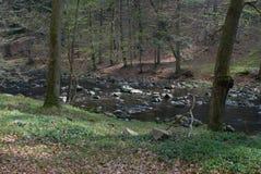 Flod i natur Royaltyfria Foton