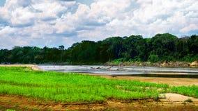 Flod i rainforest Arkivbild