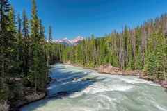 Flod i Rocky Mountains, Kanada Arkivbilder