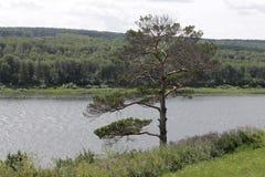 Flod i Siberia Fotografering för Bildbyråer