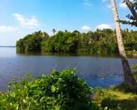 Flod i skog royaltyfri bild