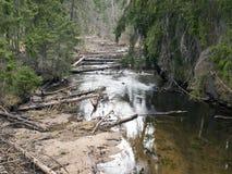 Flod i skog Arkivbilder