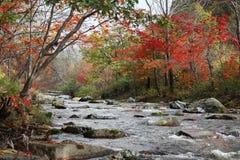 Flod i skog Arkivbild