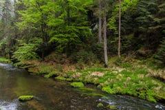 Flod i skog arkivfoto