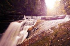 Flod i skog Royaltyfria Bilder