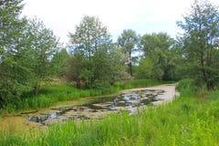 Flod i skog Royaltyfri Foto