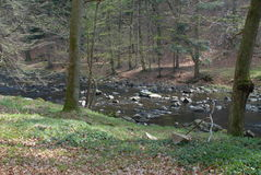 Flod i skogen Arkivbild