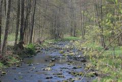 Flod i skogen Royaltyfri Foto