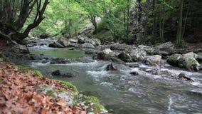 Flod i skogen stock video