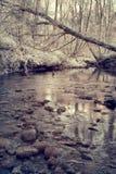 Flod i skogen Royaltyfri Bild
