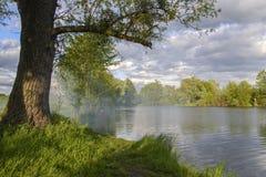 Flod i skogen Royaltyfria Foton