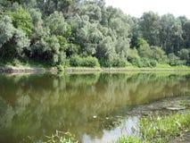 Flod i skogen fotografering för bildbyråer