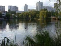Flod i skogen arkivfoto