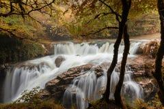Flod i skogen royaltyfria bilder