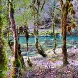 Flod i skogen Arkivfoton
