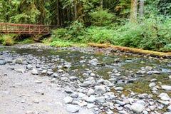 Flod i skogen i den olympiska nationalparken, Washington, USA arkivfoton