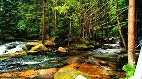 Flod i skogen med kristallklart vatten Royaltyfria Bilder