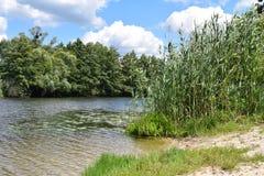 Flod i skogen på en solig dag Royaltyfri Fotografi