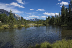 Flod i skogen vid bergen Arkivfoto