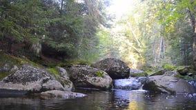 Flod i solsken i Mont Tremblant Park arkivfilmer
