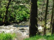 Flod i träna Royaltyfria Bilder