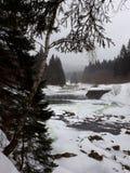 Flod i vinterträn, Spindleruv Mlyn royaltyfri fotografi