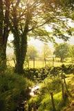 Flod i walesiska ängar på den guld- timmen Arkivbild