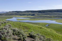 Flod i Yellowstone Arkivfoton