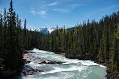 Flod i yohonationalpark royaltyfria foton