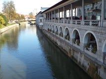 Flod ljubljana Arkivbild