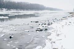 Flod med att driva för is och den kala skogen som är synliga på andra sidan Arkivfoto