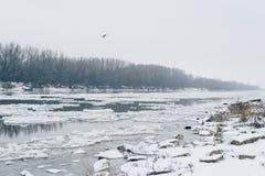 Flod med att driva för is och den kala skogen som är synliga på andra sidan Royaltyfri Foto