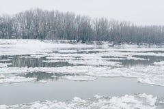 Flod med att driva för is och den kala skogen som är synliga på andra sidan Royaltyfri Bild