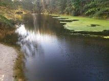Flod med grön fred Fotografering för Bildbyråer