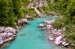 Flod med grönt vatten Fotografering för Bildbyråer