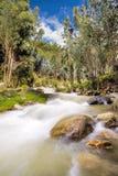 Flod med lång utläggning för eukalyptus arkivfoto