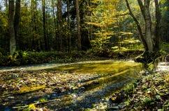 Flod med strålar av solsken Royaltyfri Fotografi