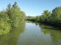 Flod med träd på en solig sommardag Royaltyfria Bilder