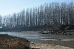 Flod med trees Royaltyfri Bild