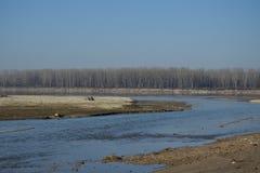 Flod med trees Arkivfoto