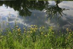 Flod med växten Royaltyfri Fotografi