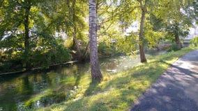 Flod mellan träd Arkivbild
