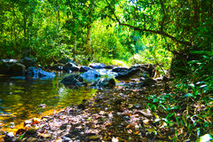 Flod mot bakgrunden av den ogenomträngliga djungeln fotografering för bildbyråer