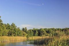 Flod nära skog Fotografering för Bildbyråer